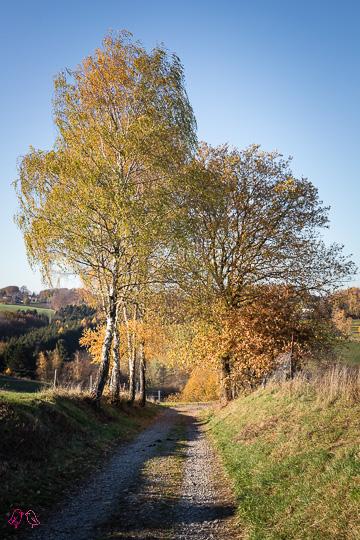 Wandern im Naafbachtal