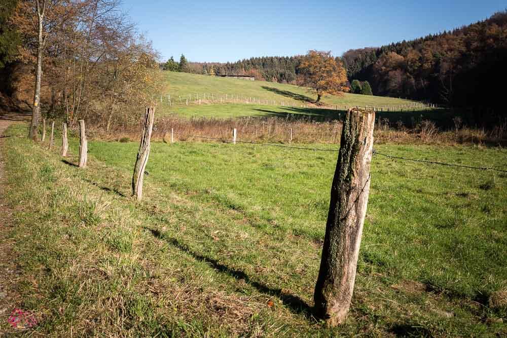 Wandern im Naafbachtal_beitrag