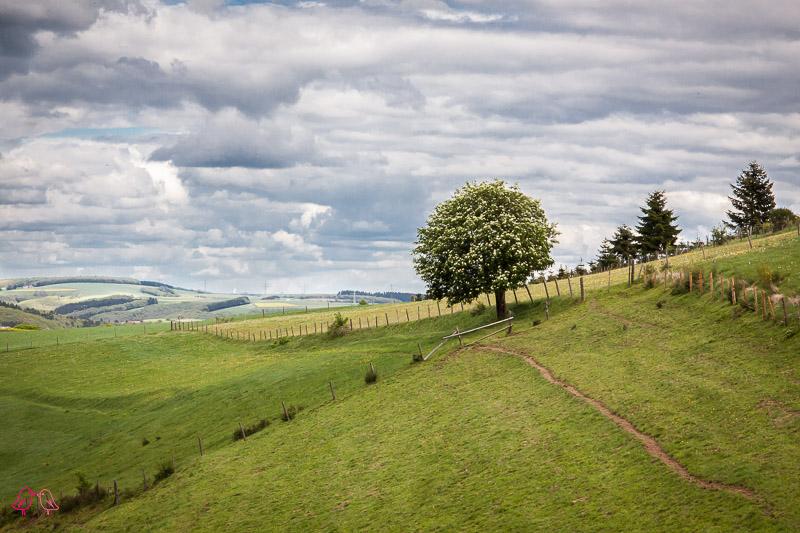 Wanderfüherer Leetrail und Eislek Trail