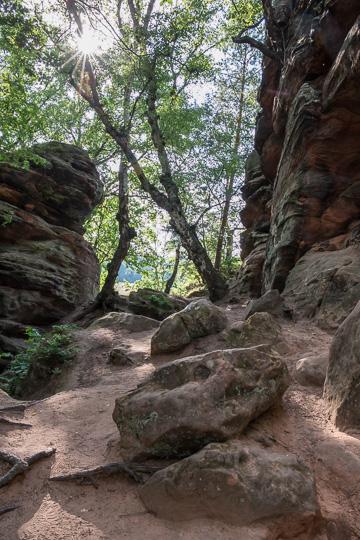 Eifelschleife Ab in den Wald