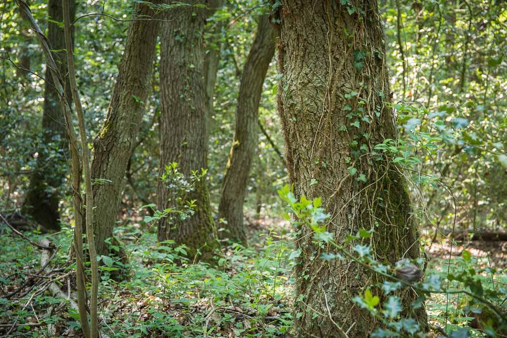 Eifelschleife Ab in den Wald_Beitrag